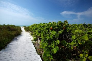 boardwalk to beach with foliage