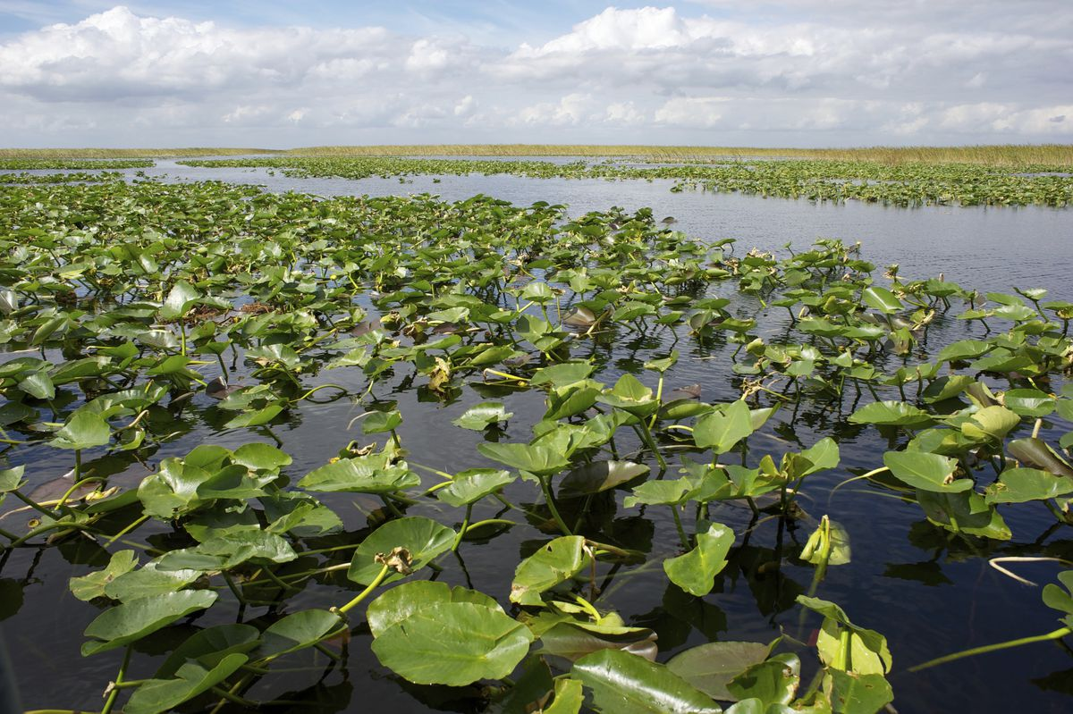March was the driest on record in Florida. Can the Everglades cope?