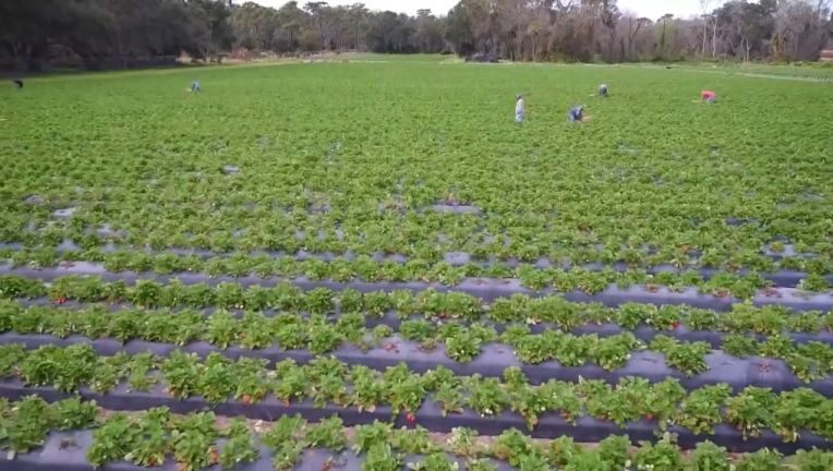 Keep Florida Growing: New website connects struggling farmers with Florida customers